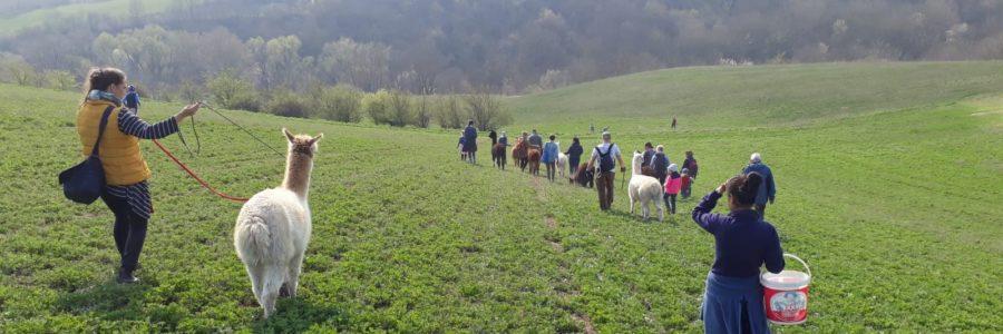 WELTentdecker Land- und Waldtour mit Überraschung